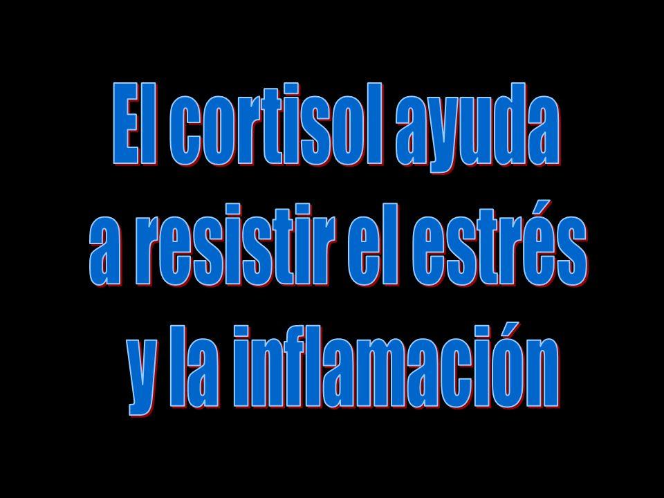 El cortisol ayuda a resistir el estrés y la inflamación