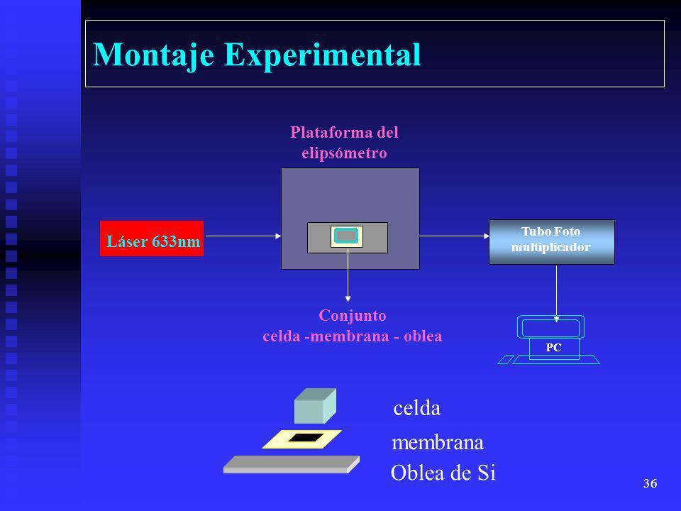 celda -membrana - oblea
