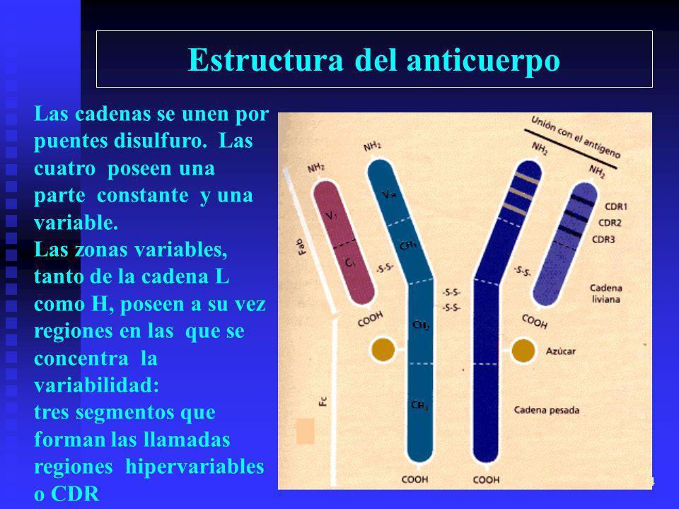 Estructura del anticuerpo