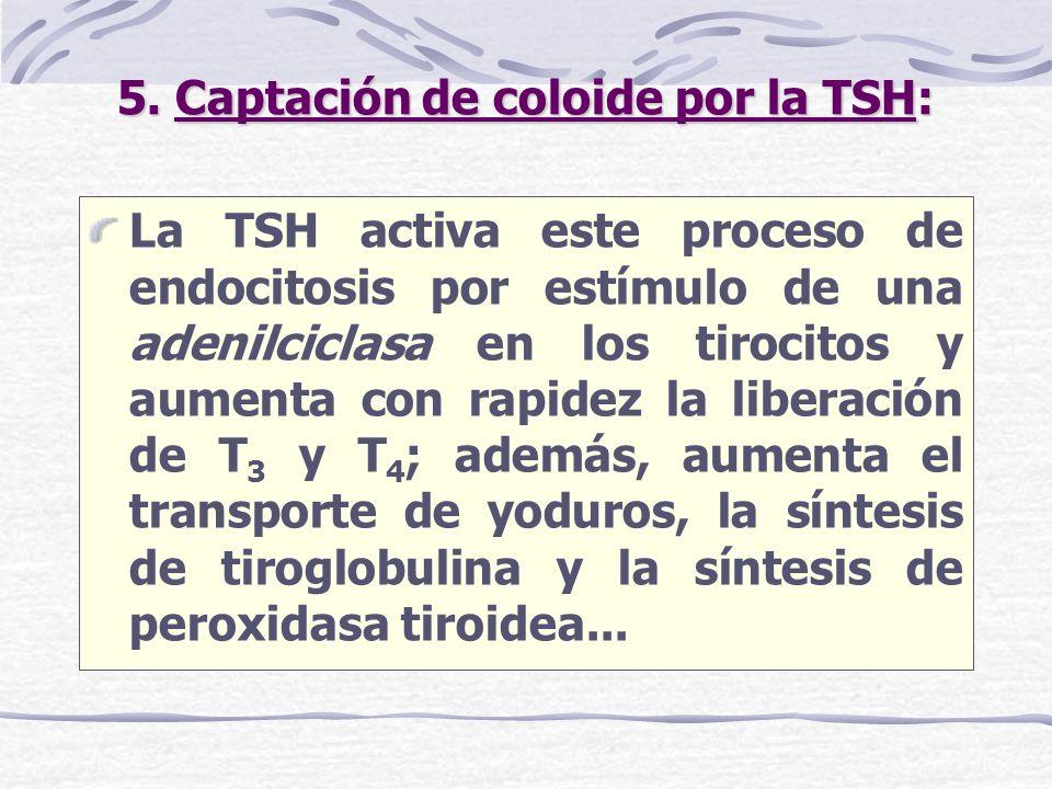 5. Captación de coloide por la TSH: