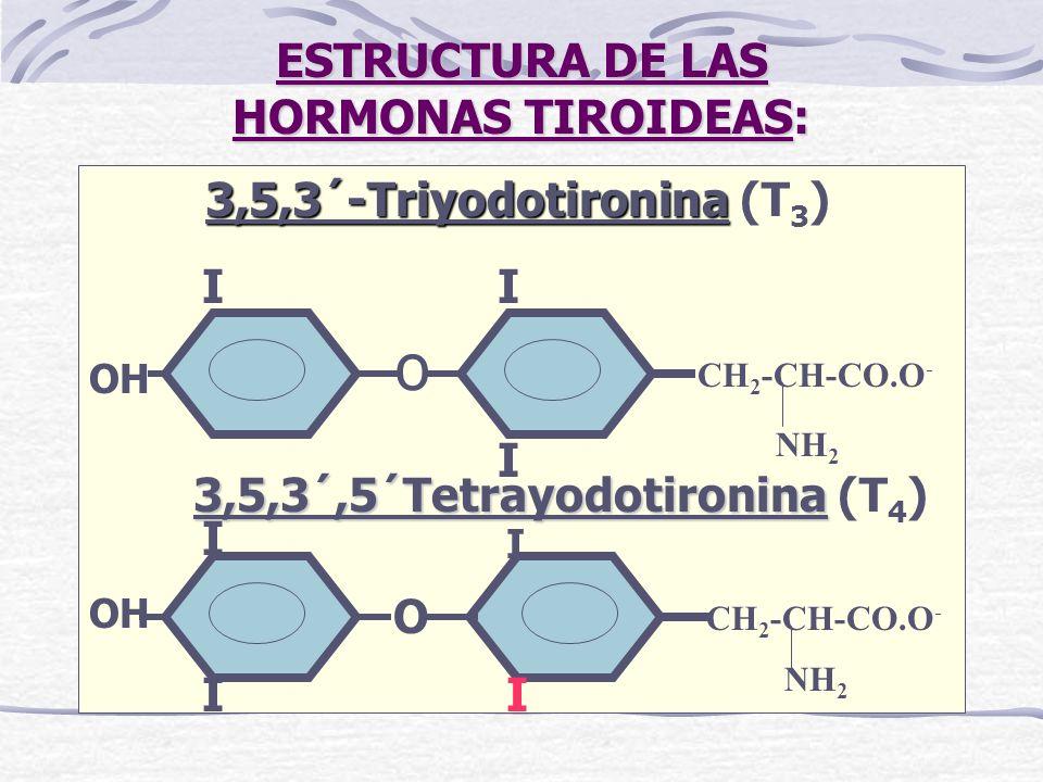 ESTRUCTURA DE LAS HORMONAS TIROIDEAS: