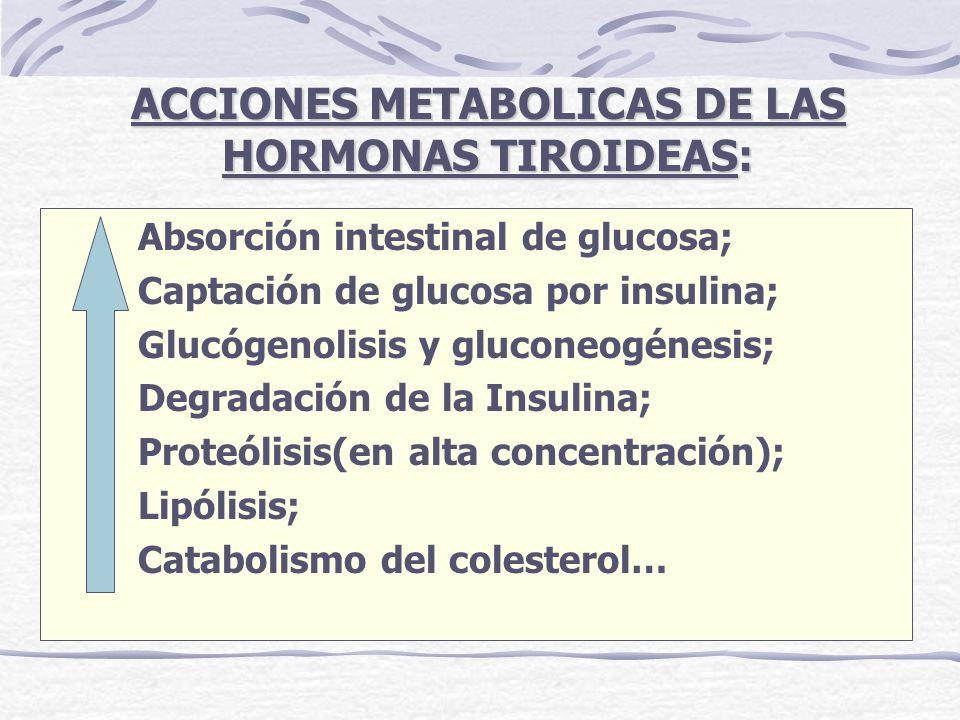 ACCIONES METABOLICAS DE LAS HORMONAS TIROIDEAS: