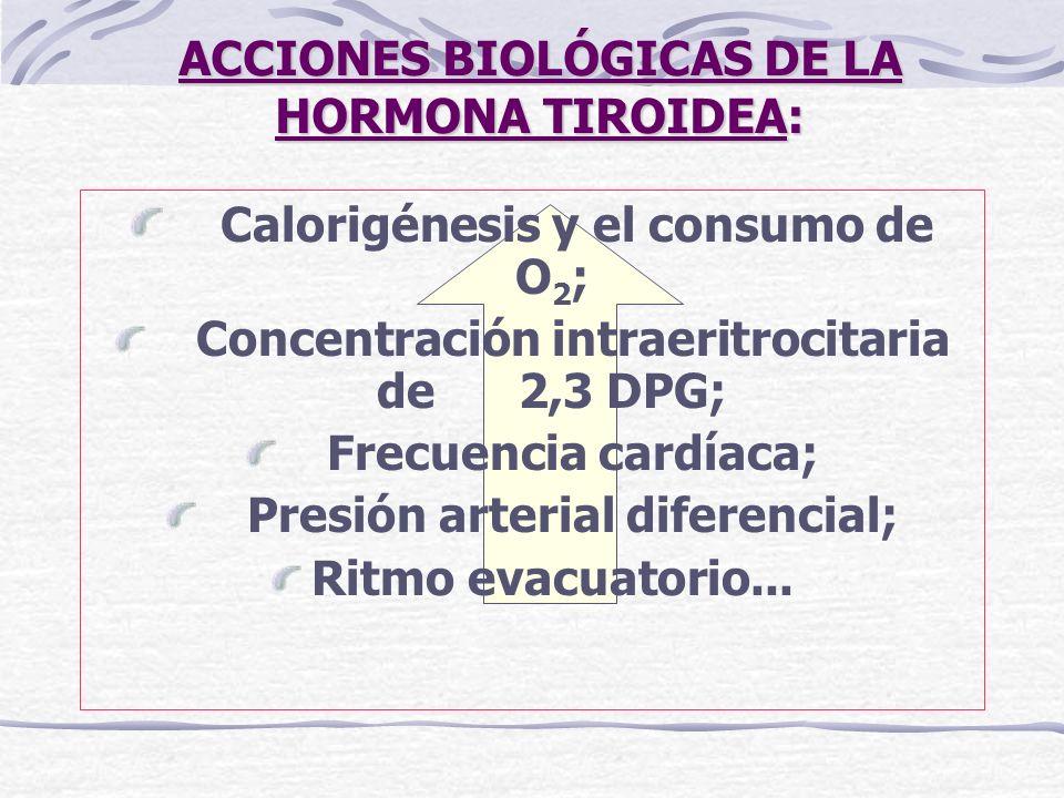 ACCIONES BIOLÓGICAS DE LA HORMONA TIROIDEA: