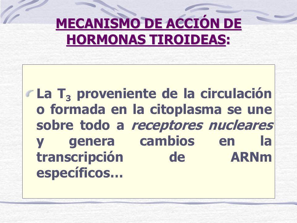 MECANISMO DE ACCIÓN DE HORMONAS TIROIDEAS: