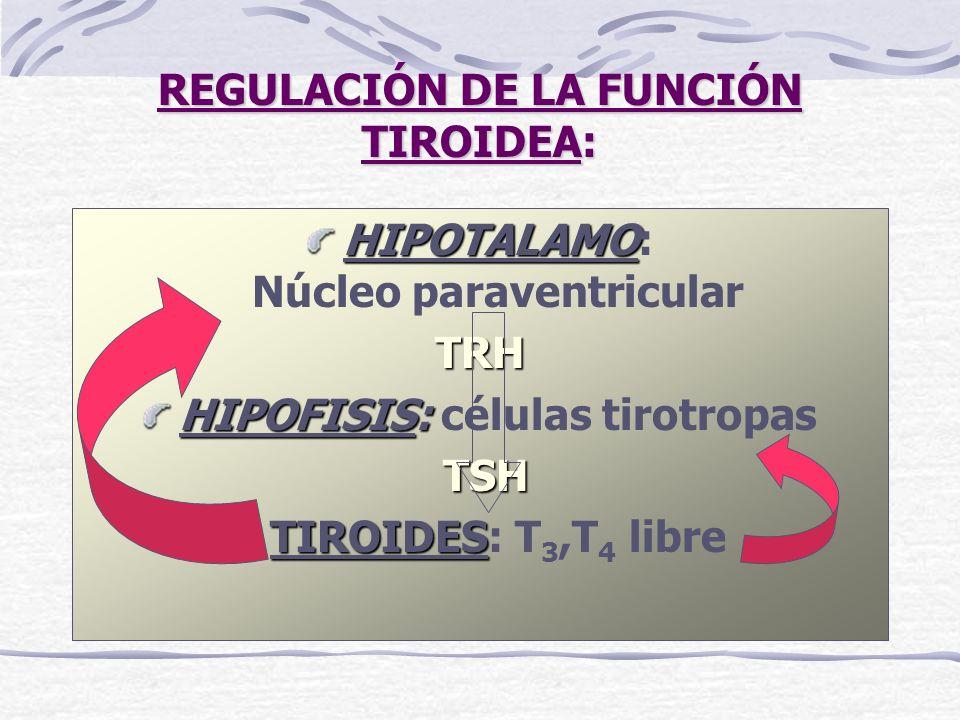 REGULACIÓN DE LA FUNCIÓN TIROIDEA: