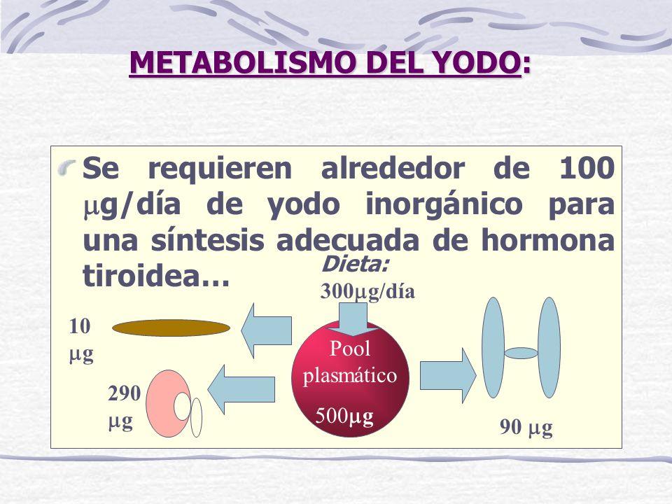 METABOLISMO DEL YODO: Se requieren alrededor de 100 mg/día de yodo inorgánico para una síntesis adecuada de hormona tiroidea…