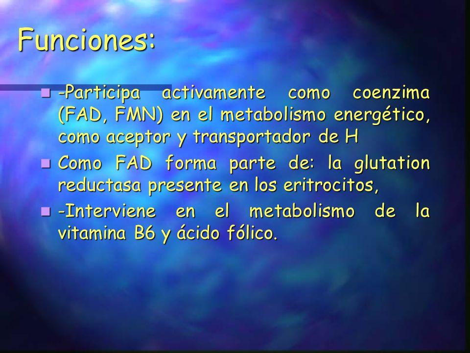 Funciones: -Participa activamente como coenzima (FAD, FMN) en el metabolismo energético, como aceptor y transportador de H.