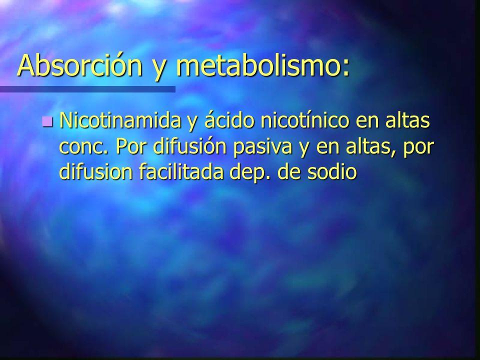 Absorción y metabolismo: