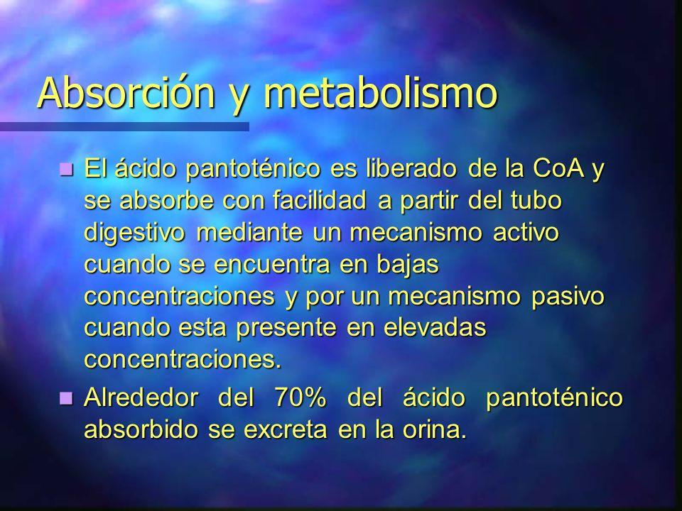 Absorción y metabolismo