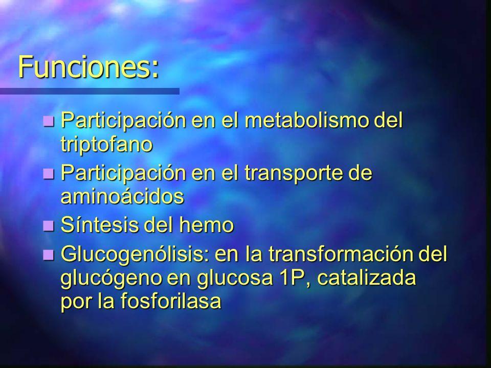 Funciones: Participación en el metabolismo del triptofano