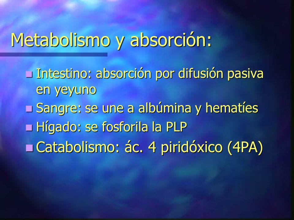 Metabolismo y absorción: