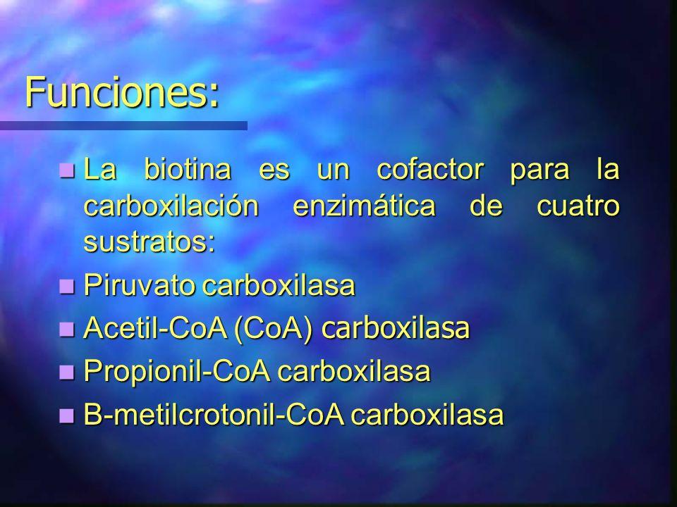 Funciones: La biotina es un cofactor para la carboxilación enzimática de cuatro sustratos: Piruvato carboxilasa.