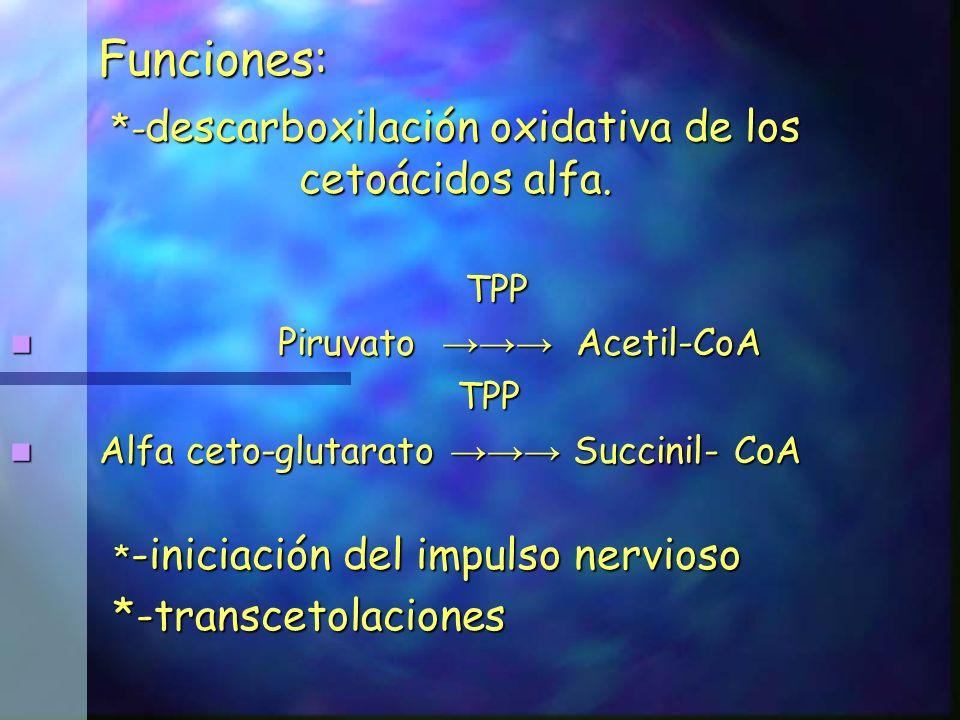 *-descarboxilación oxidativa de los cetoácidos alfa.