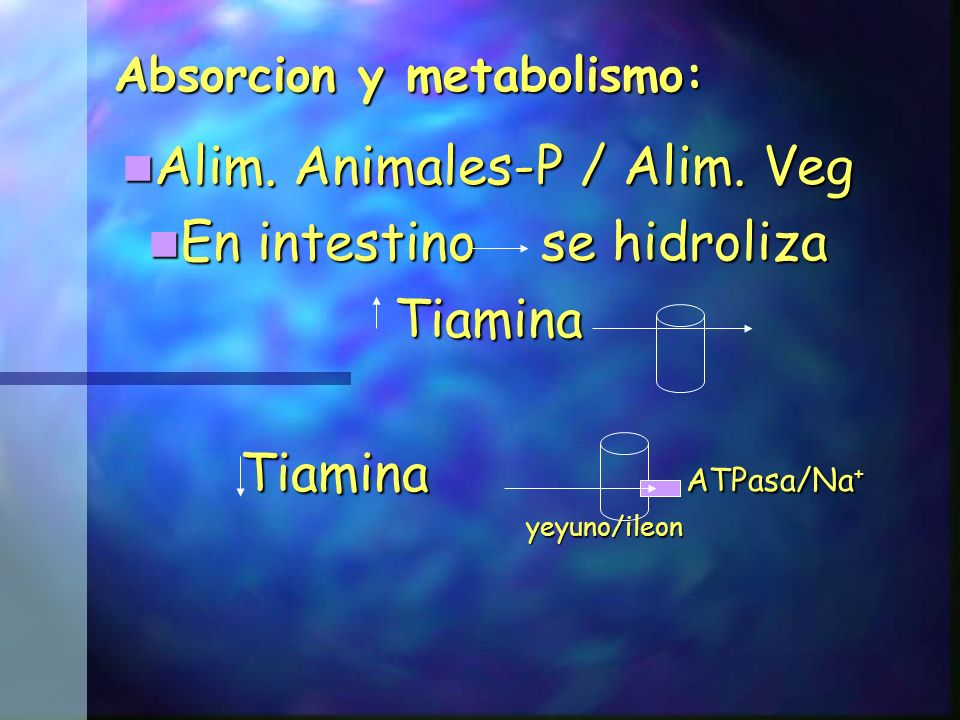 Absorcion y metabolismo: