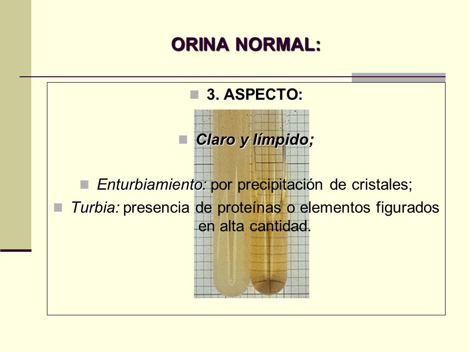 ORINA NORMAL: 3. ASPECTO: Claro y límpido;