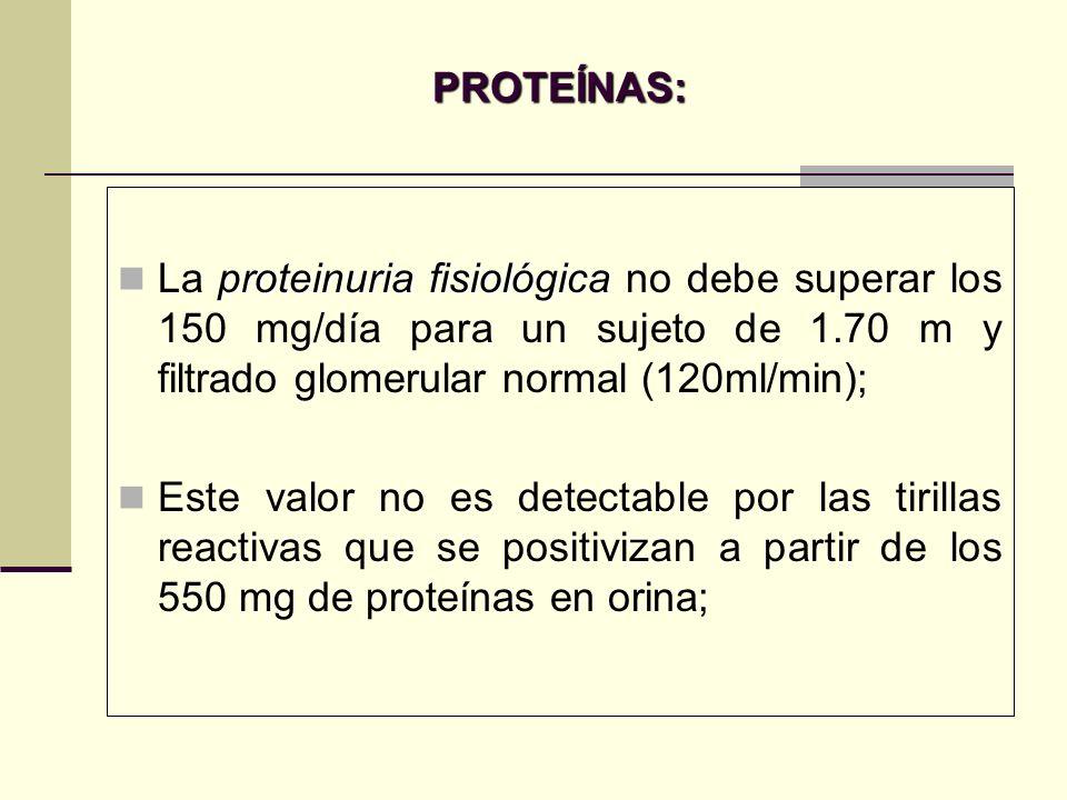 PROTEÍNAS:La proteinuria fisiológica no debe superar los 150 mg/día para un sujeto de 1.70 m y filtrado glomerular normal (120ml/min);
