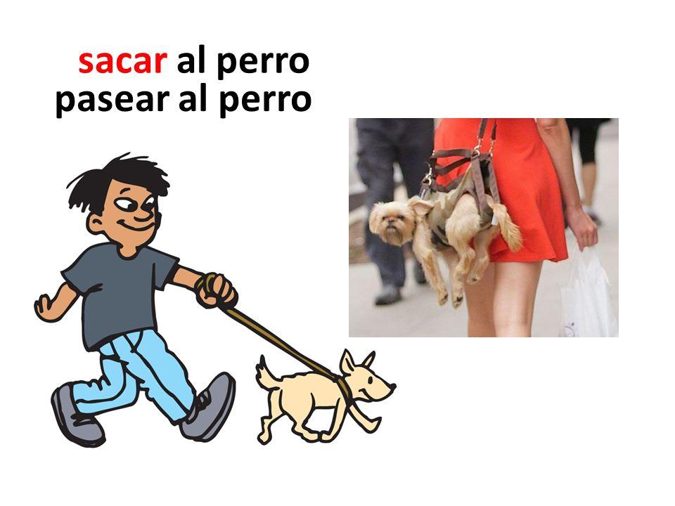 sacar al perro pasear al perro