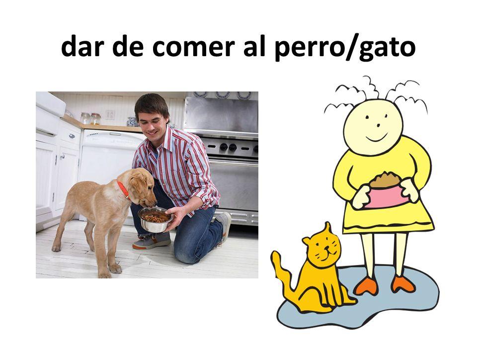 dar de comer al perro/gato
