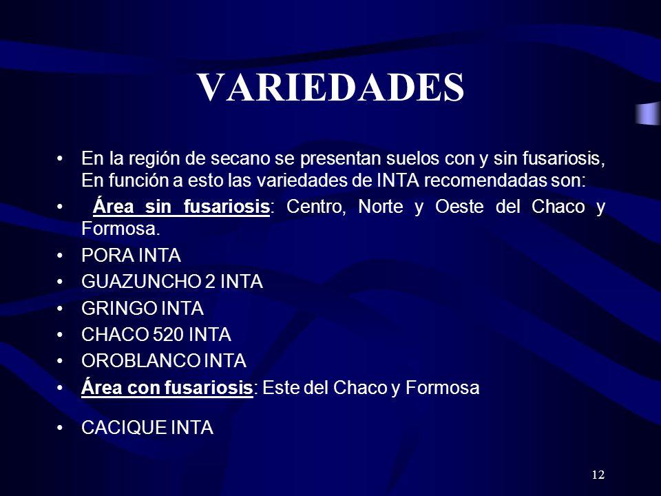 VARIEDADES En la región de secano se presentan suelos con y sin fusariosis, En función a esto las variedades de INTA recomendadas son: