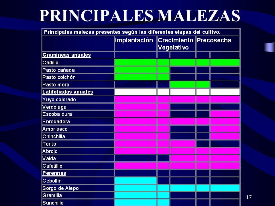 PRINCIPALES MALEZAS