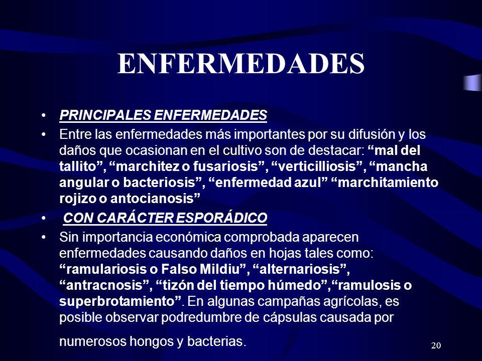 ENFERMEDADES PRINCIPALES ENFERMEDADES