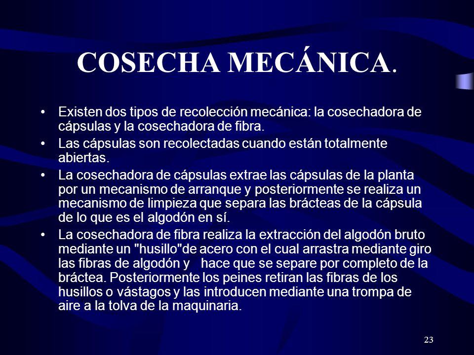 COSECHA MECÁNICA. Existen dos tipos de recolección mecánica: la cosechadora de cápsulas y la cosechadora de fibra.