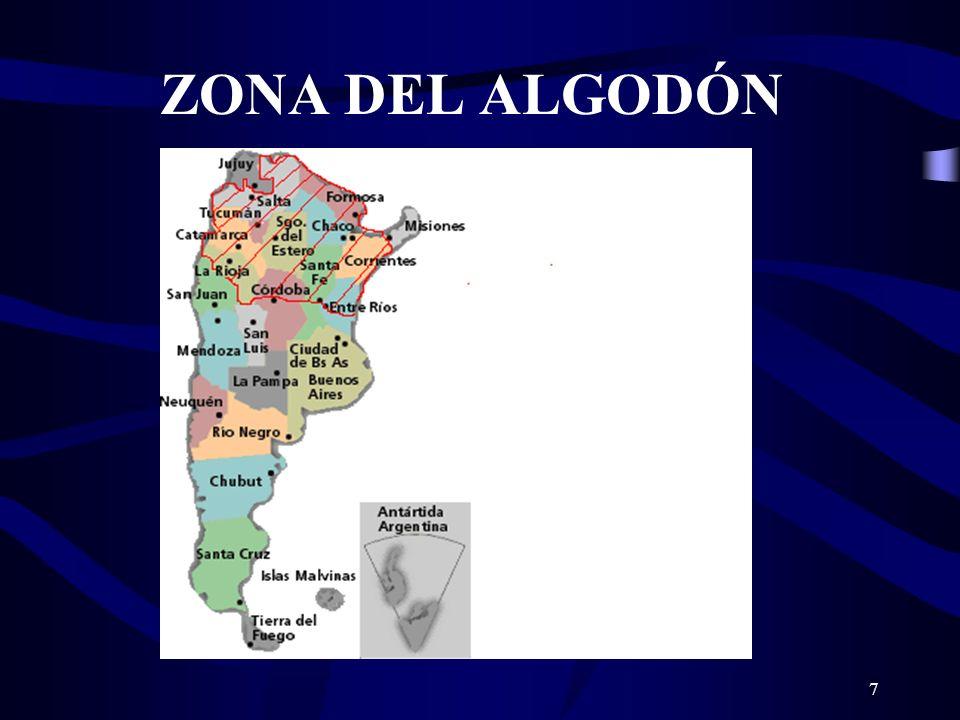 ZONA DEL ALGODÓN