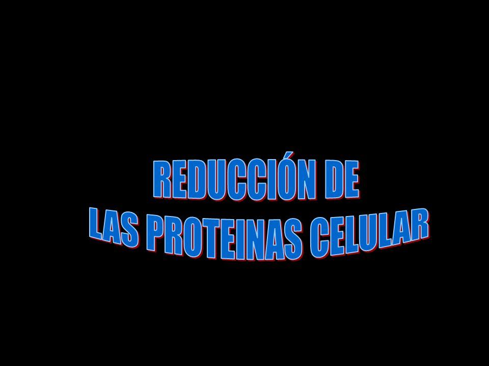 REDUCCIÓN DE LAS PROTEINAS CELULAR