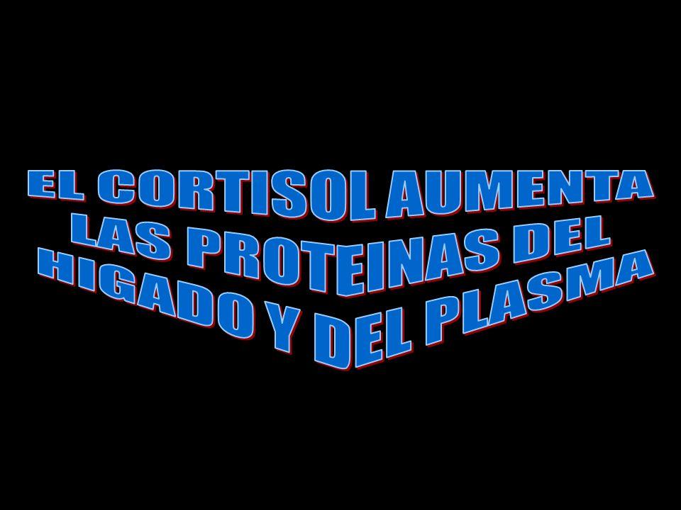 EL CORTISOL AUMENTA LAS PROTEINAS DEL HIGADO Y DEL PLASMA