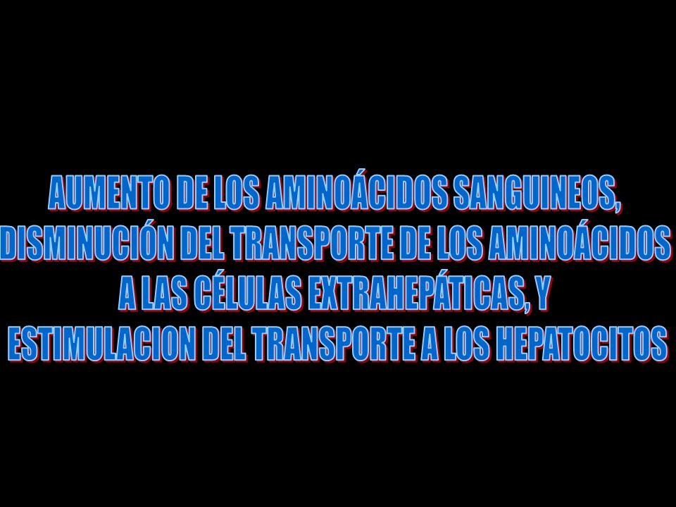 AUMENTO DE LOS AMINOÁCIDOS SANGUINEOS,