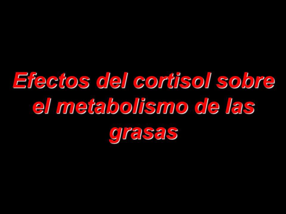 Efectos del cortisol sobre el metabolismo de las grasas