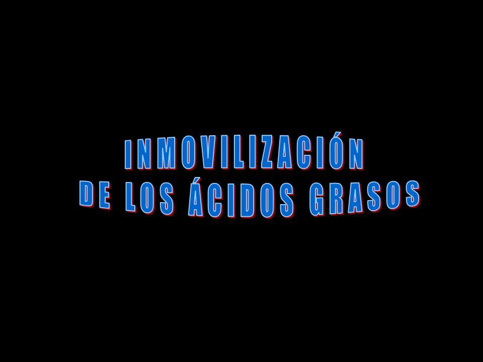 INMOVILIZACIÓN DE LOS ÁCIDOS GRASOS
