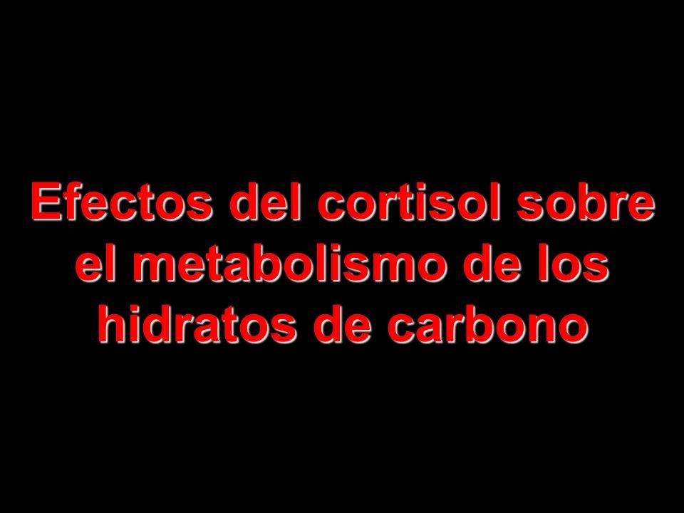 Efectos del cortisol sobre el metabolismo de los hidratos de carbono