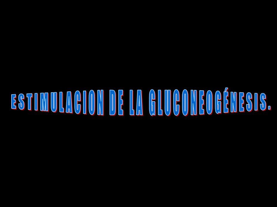 ESTIMULACION DE LA GLUCONEOGÉNESIS.
