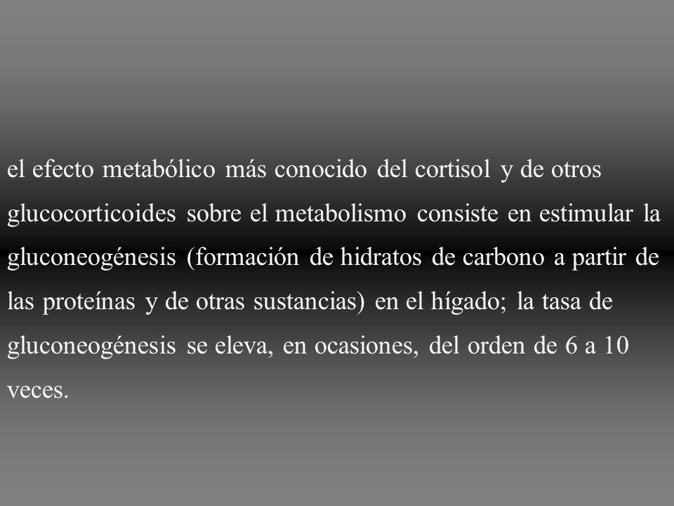 el efecto metabólico más conocido del cortisol y de otros glucocorticoides sobre el metabolismo consiste en estimular la gluconeogénesis (formación de hidratos de carbono a partir de las proteínas y de otras sustancias) en el hígado; la tasa de gluconeogénesis se eleva, en ocasiones, del orden de 6 a 10 veces.