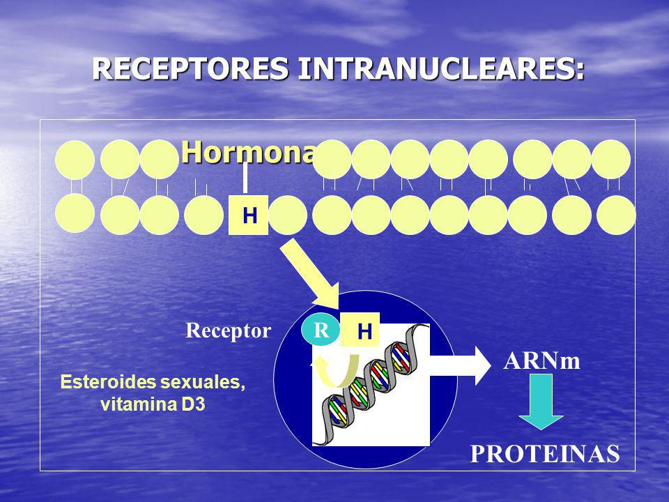 RECEPTORES INTRANUCLEARES: