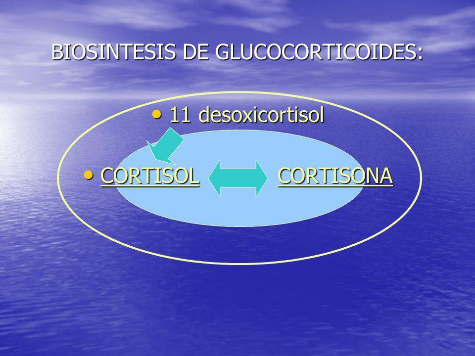 BIOSINTESIS DE GLUCOCORTICOIDES:
