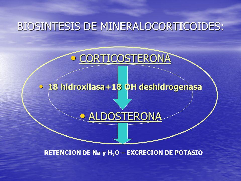 BIOSINTESIS DE MINERALOCORTICOIDES: