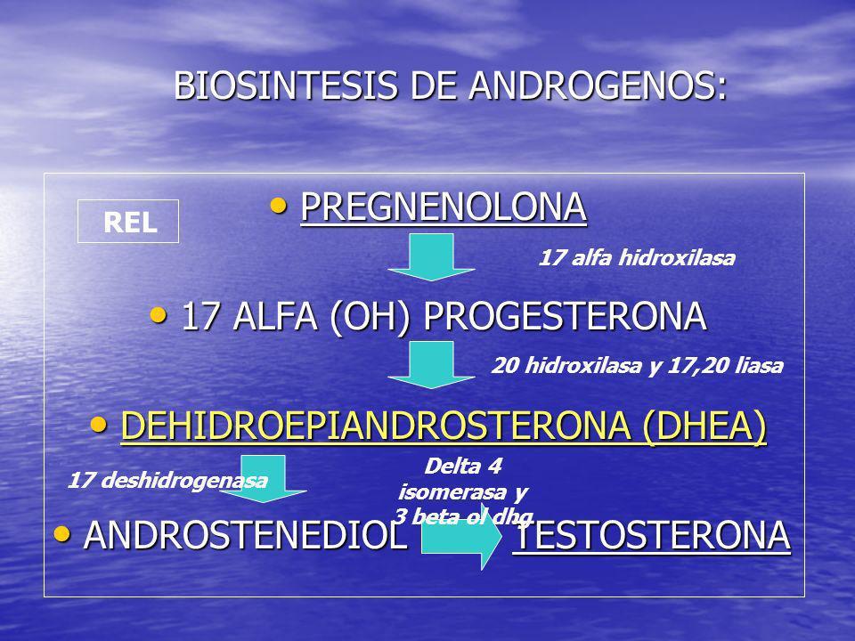 BIOSINTESIS DE ANDROGENOS:
