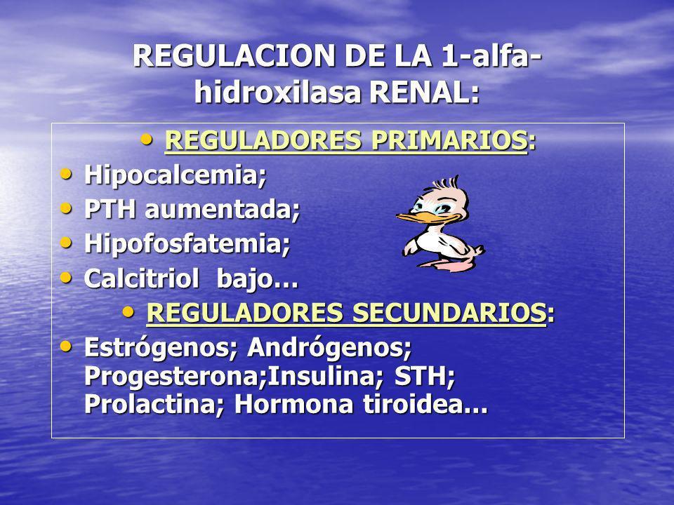 REGULACION DE LA 1-alfa- hidroxilasa RENAL: