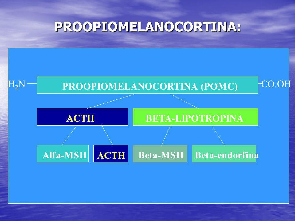PROOPIOMELANOCORTINA: