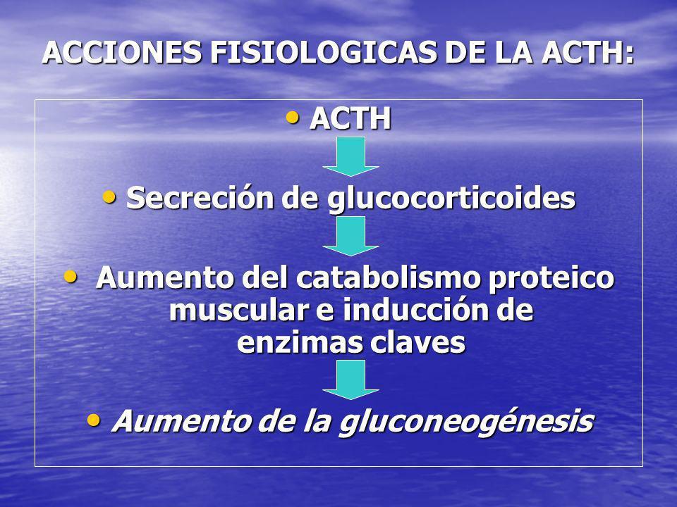 ACCIONES FISIOLOGICAS DE LA ACTH: