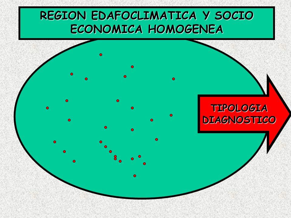 REGION EDAFOCLIMATICA Y SOCIO ECONOMICA HOMOGENEA