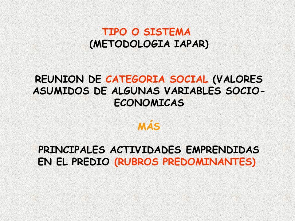 REUNION DE CATEGORIA SOCIAL (VALORES