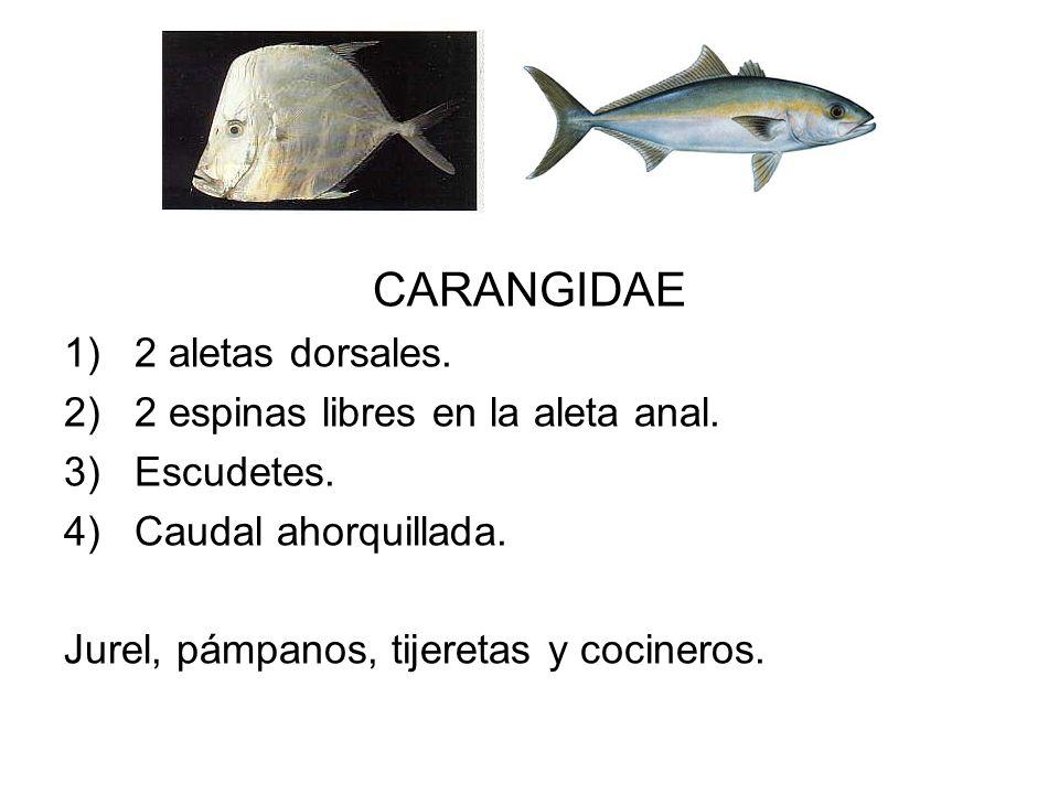 CARANGIDAE 2 aletas dorsales. 2 espinas libres en la aleta anal.