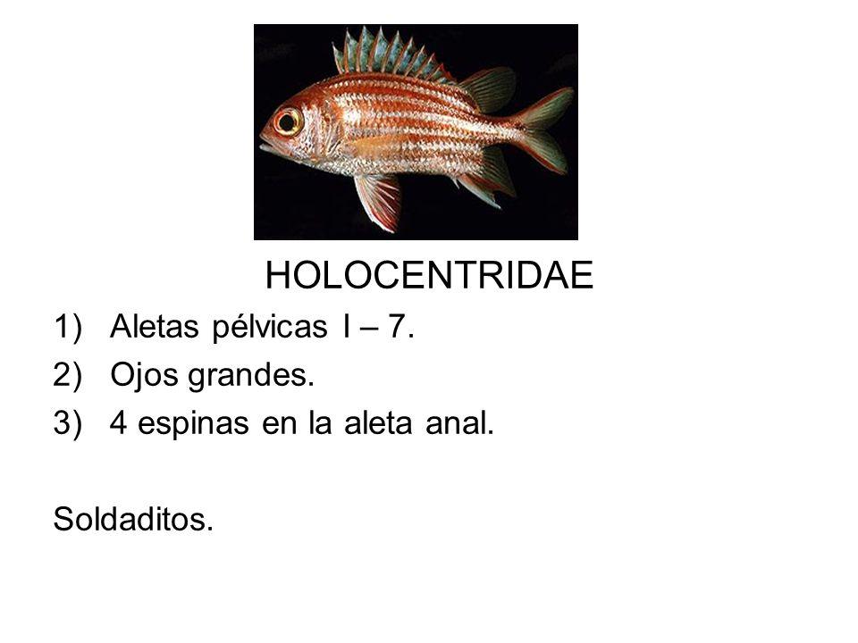HOLOCENTRIDAE Aletas pélvicas I – 7. Ojos grandes.