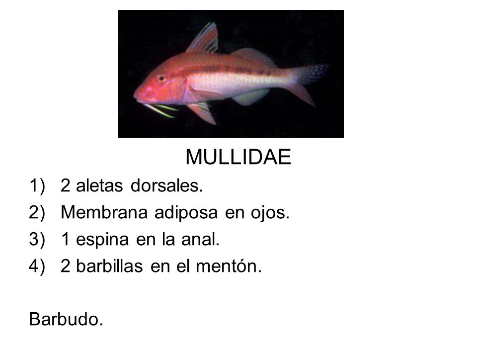 MULLIDAE 2 aletas dorsales. Membrana adiposa en ojos.