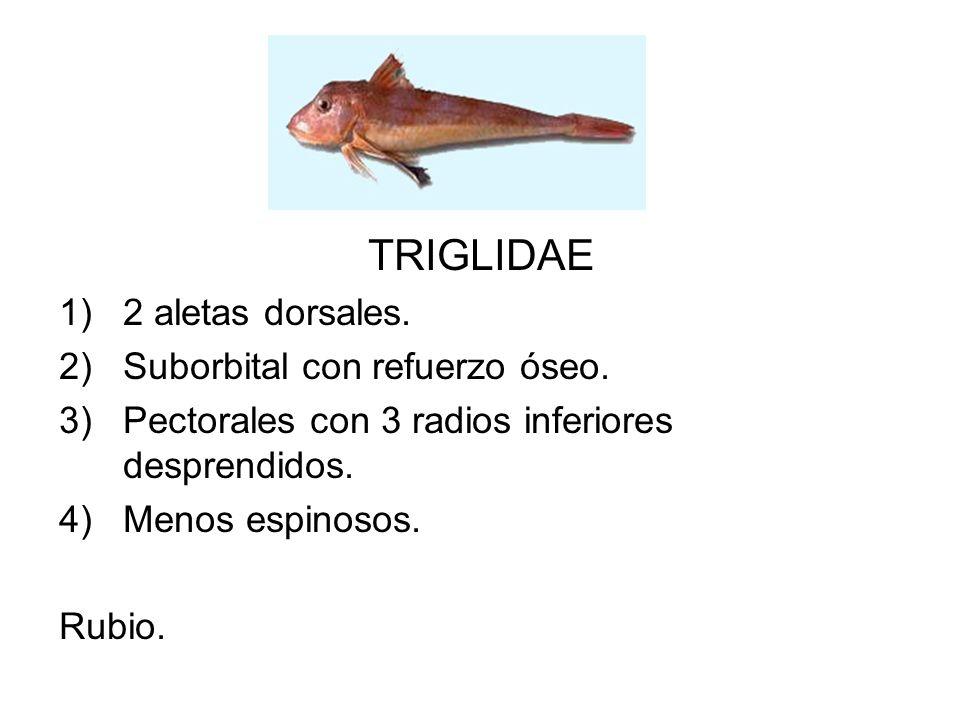 TRIGLIDAE 2 aletas dorsales. Suborbital con refuerzo óseo.