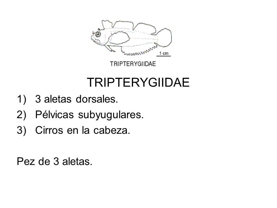 TRIPTERYGIIDAE 3 aletas dorsales. Pélvicas subyugulares.
