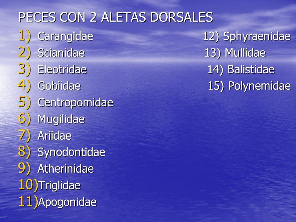 PECES CON 2 ALETAS DORSALES